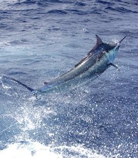 Contact Iona Game Fishing -