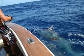 Gold Coast Game Fishing -